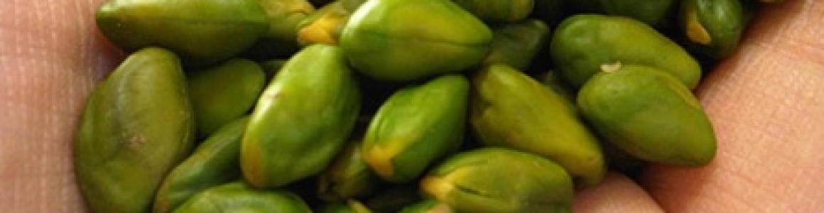 Green Pistachio Kernel Superior quality